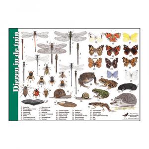 Herkenningskaart Dieren in de tuin